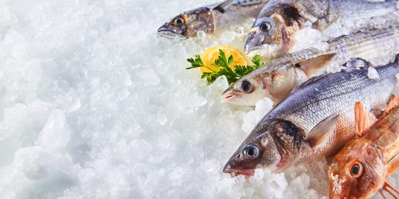 日本の水産業と食を守る!